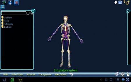 Anatomy 3D версия 1.3