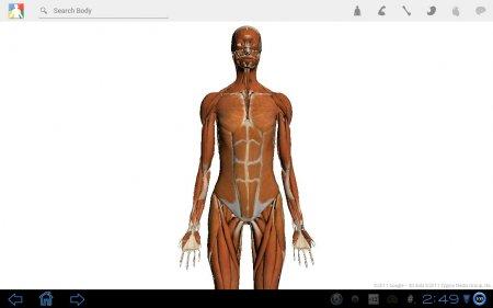 Google Body версия 1.0