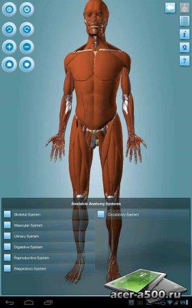 Anatomy 3D Pro - Anatronica (обновлено до версии 2.07)